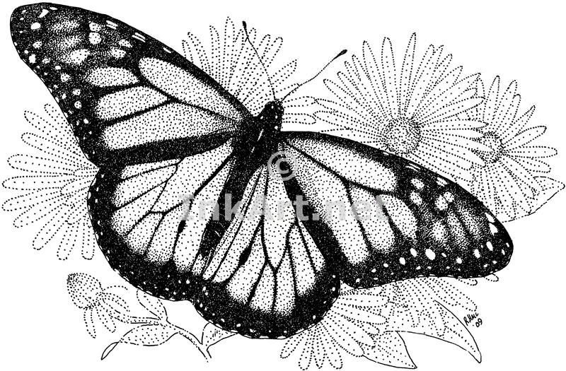 monarch butterfly coloring page - line drawings of butterflies