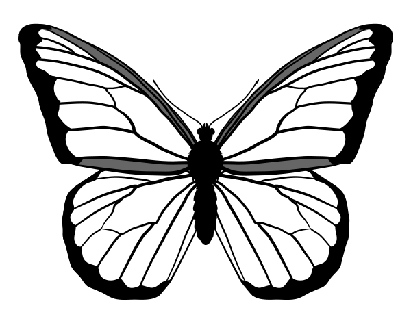 monarch butterfly coloring page - monarch butterfly drawing