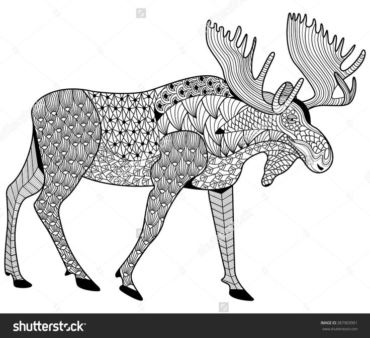 moose coloring pages - coloring pages