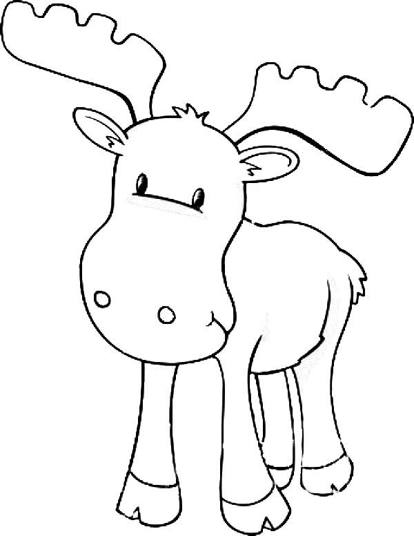 moose coloring pages -