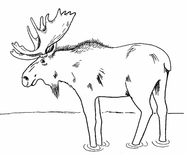 moose coloring pages - moose coloring page 2