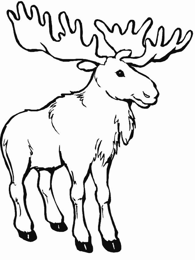 moose coloring pages - moose coloring page