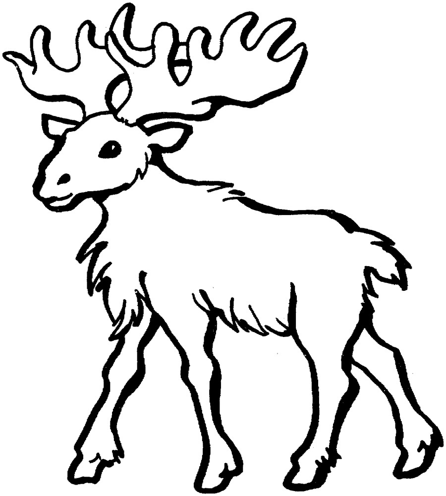 moose coloring pages - printable moose coloring pages