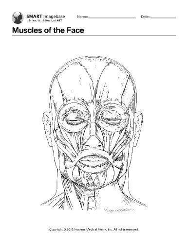 muscle coloring pages -