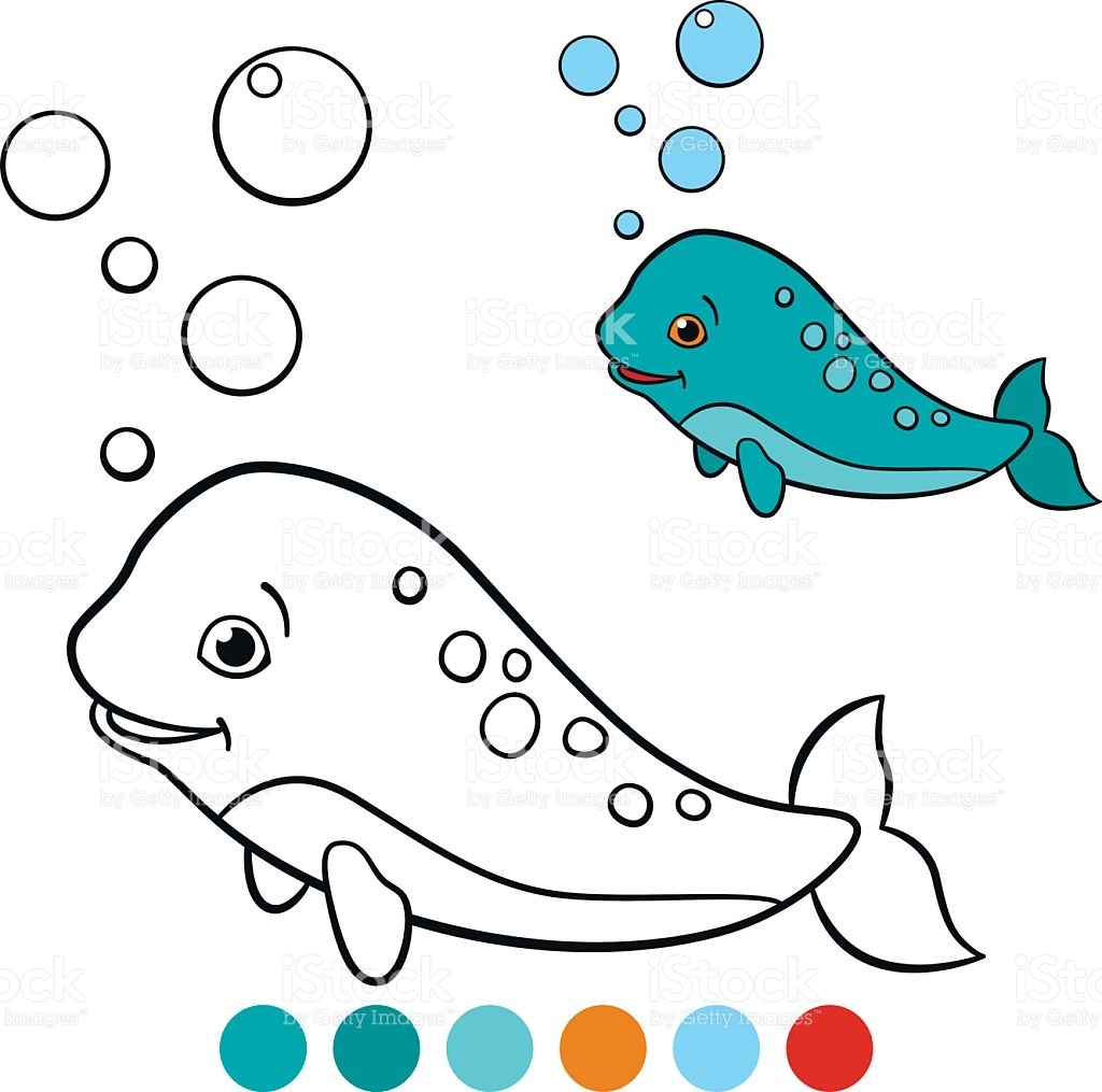 narwhal coloring page - coloring pages narwhal