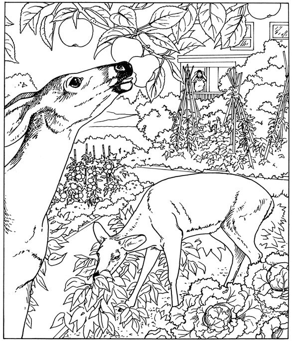 nature coloring pages for adults - nature coloring pages