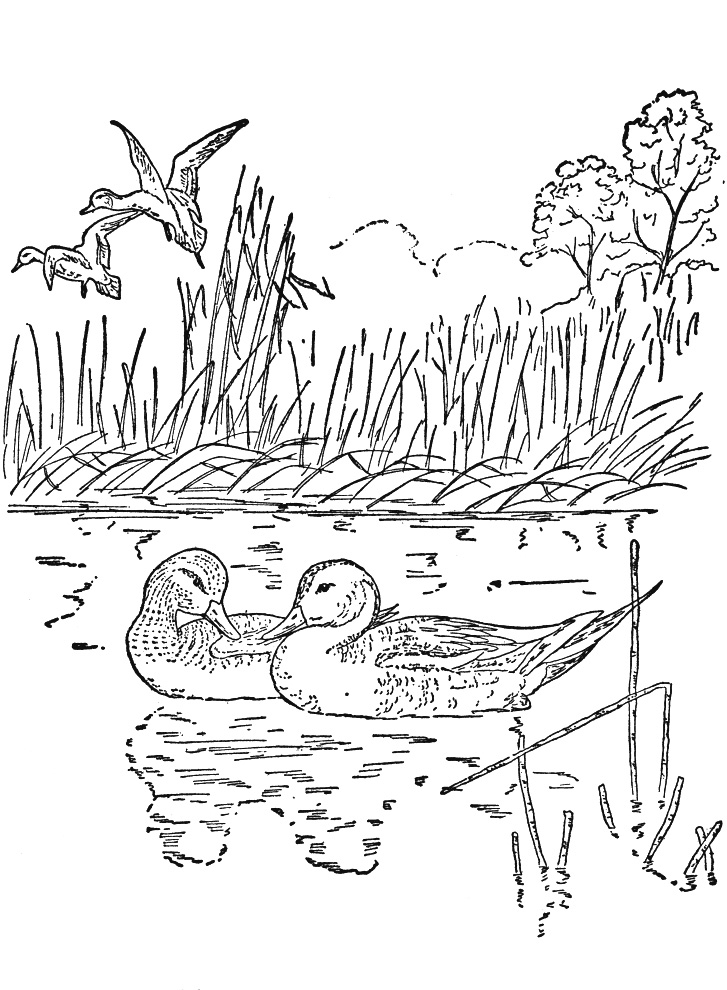 nature coloring pages for adults - coloring pages for adults nature