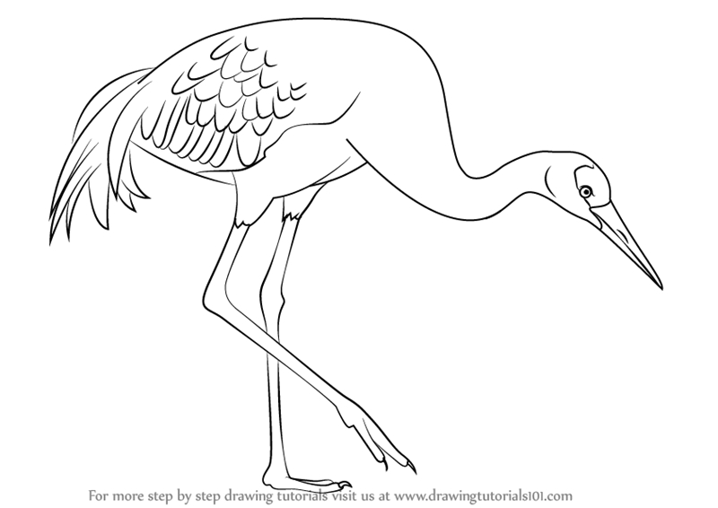 north america coloring page - how to draw a sandhill crane step by step