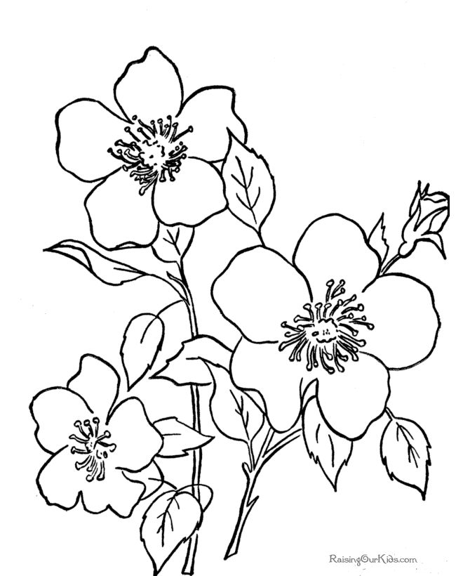 november coloring pages - print perfect coloring pages free printable flower coloring pages are 3