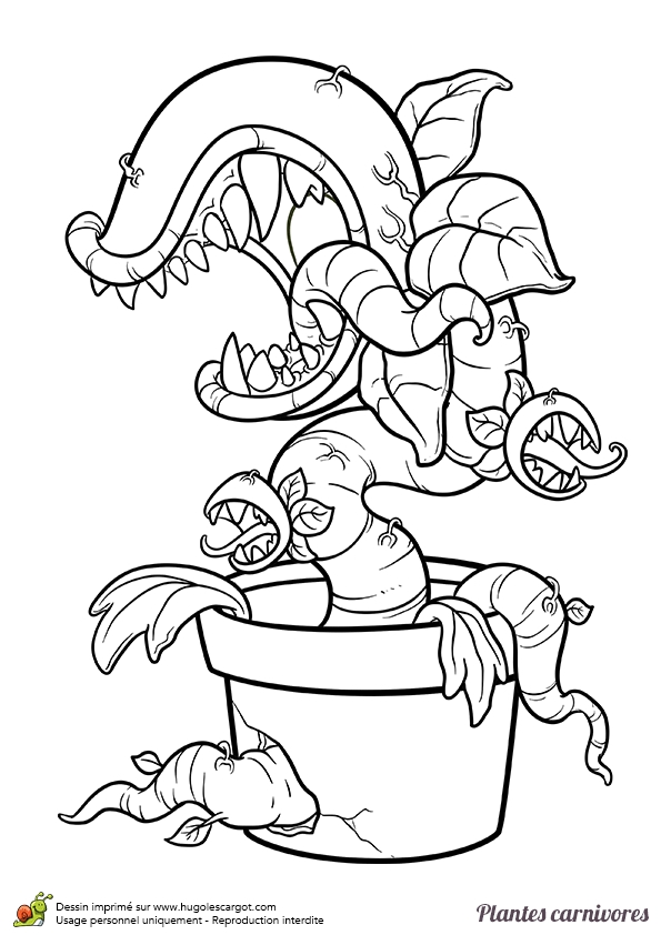 nyan cat coloring pages - coloriage a dessiner plante carnivore mario