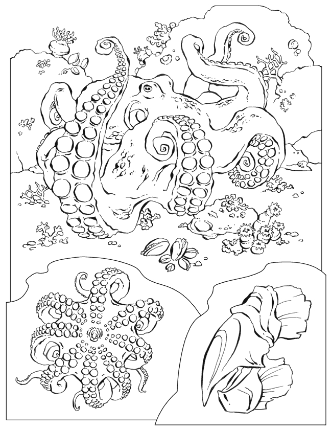 ocean coloring pages for adults -