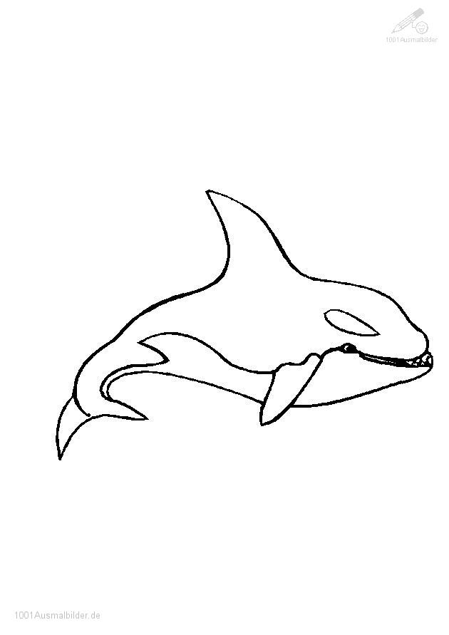 orca coloring pages - Ausmalbild Wal 625