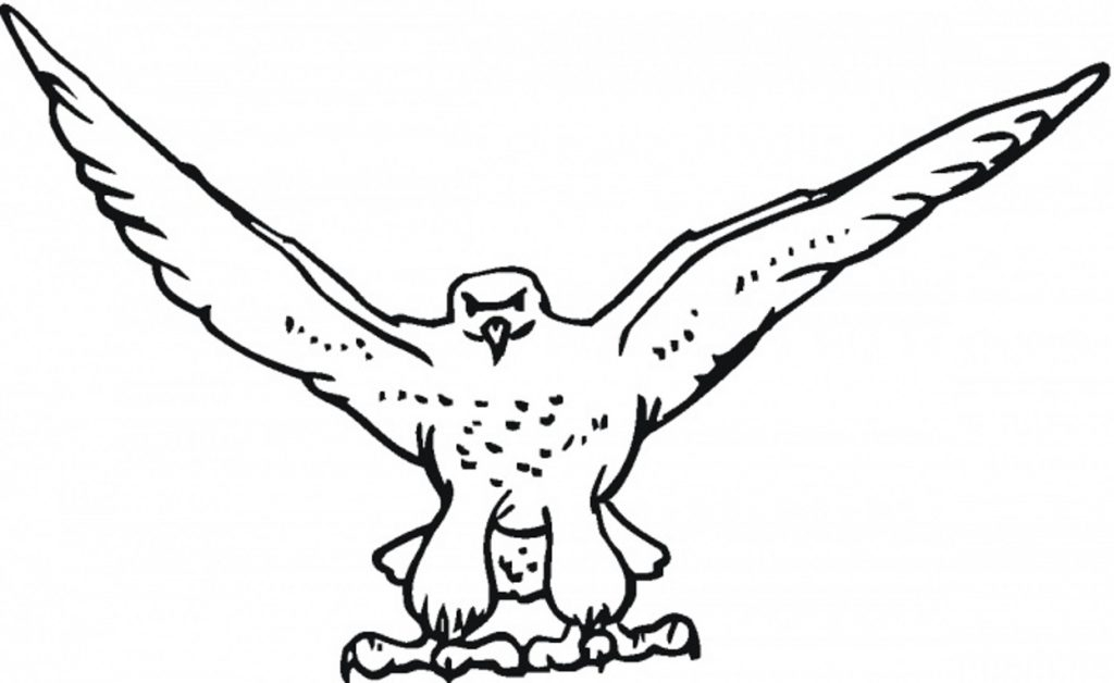 ostrich coloring page - born hawk falcon coloring pages for kids