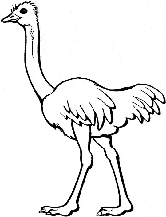 ostrich coloring page - ostrich coloring 05