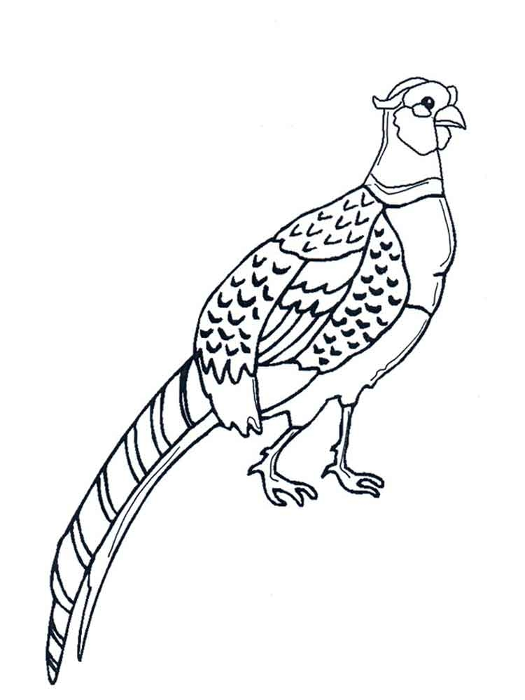 24 Ostrich Coloring Page Collections