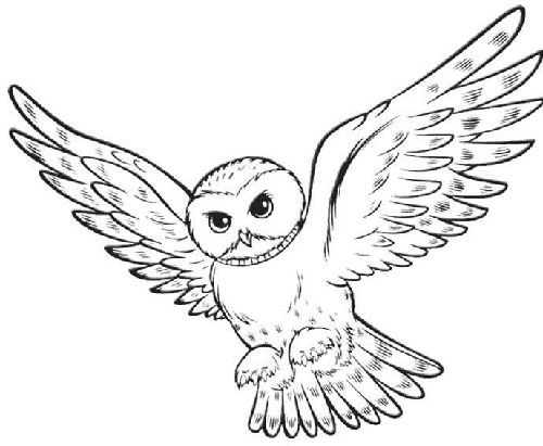 owl coloring pages for adults - harry potter