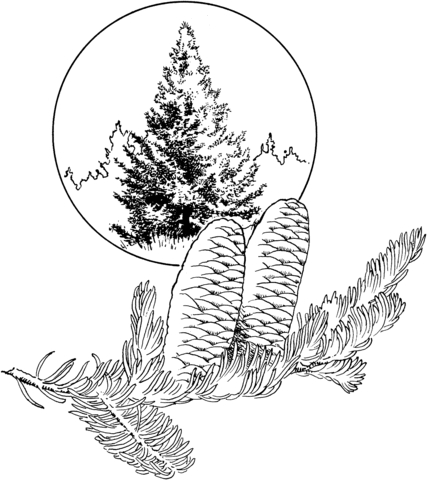 palm tree coloring pages - balsam tanne