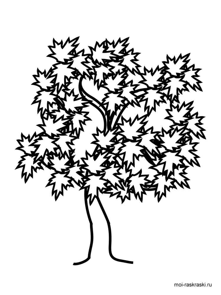 palm tree coloring pages - maple tree coloring pages