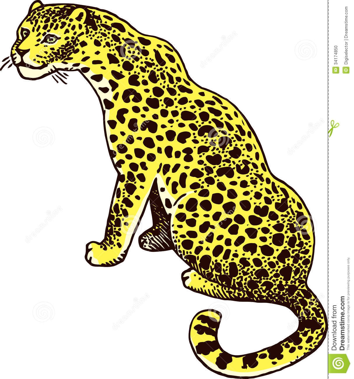 panther coloring pages - stock photo leopard panther wild cat vector illustration image