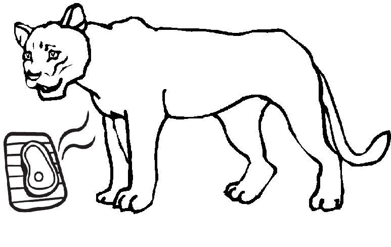 panther coloring pages - lioness clip art