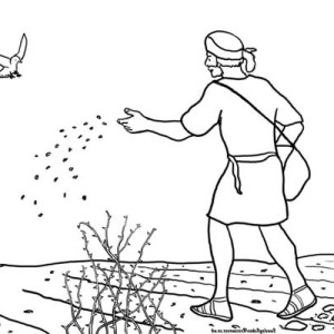Parable Of the sower Coloring Page - the Parable Of the sower Coloring Page