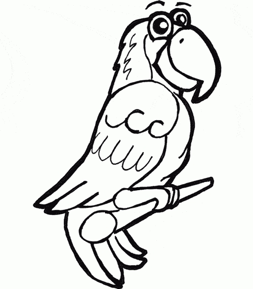 parrot coloring pages - grey parrot coloring page 1