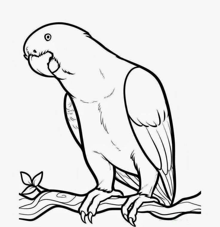 parrot coloring pages -