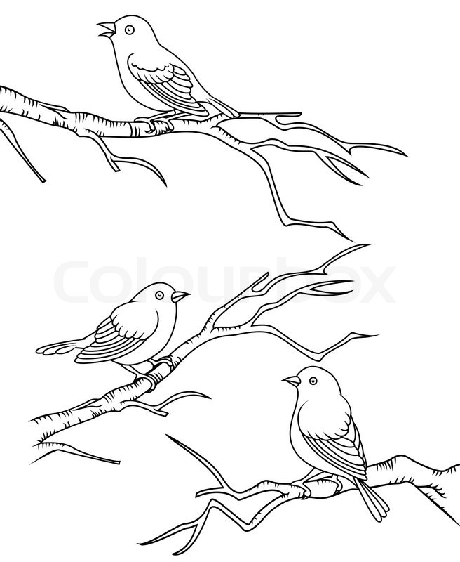 parrot coloring pages - bird sitting on a branch vector