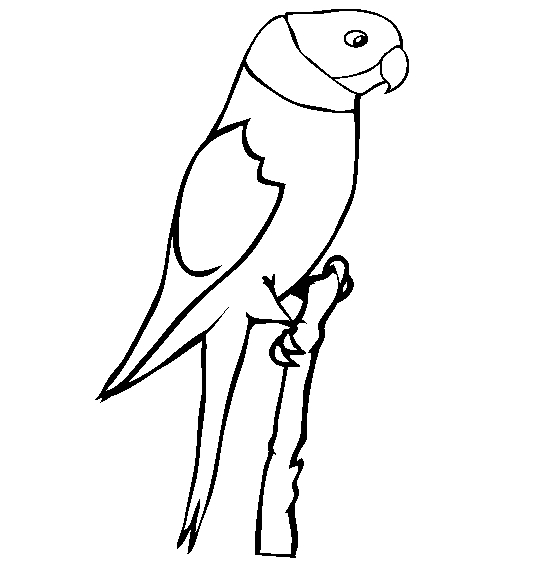 Parrot Coloring Pages - Parrot Coloring Page Animals town Animals Color Sheet