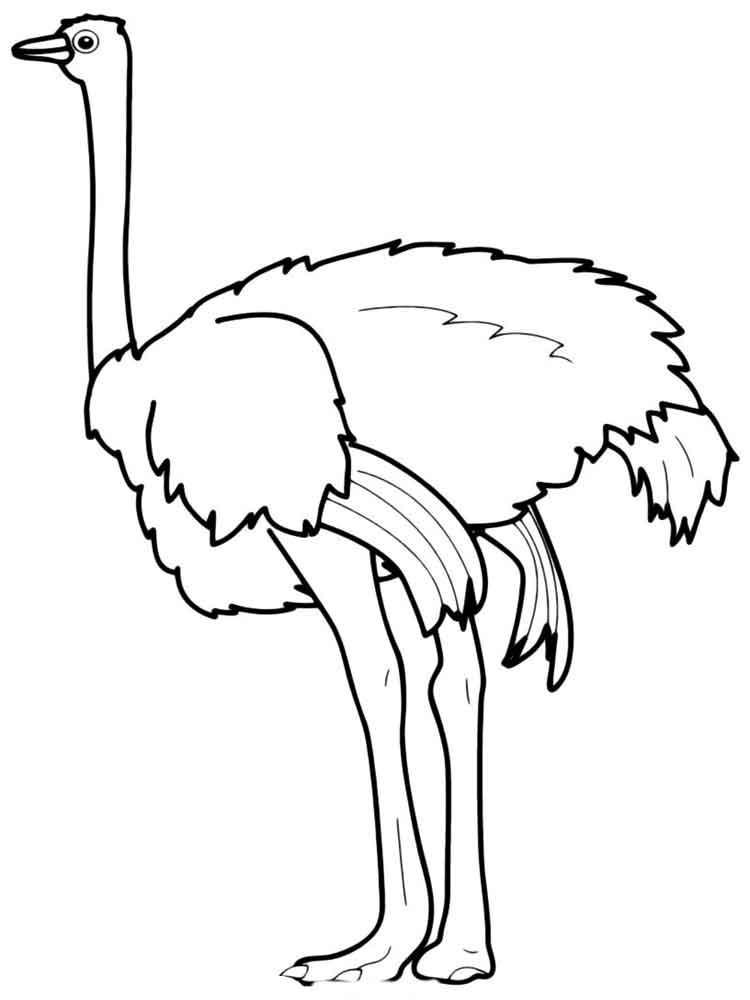 peacock coloring pages - ostrich coloring pages
