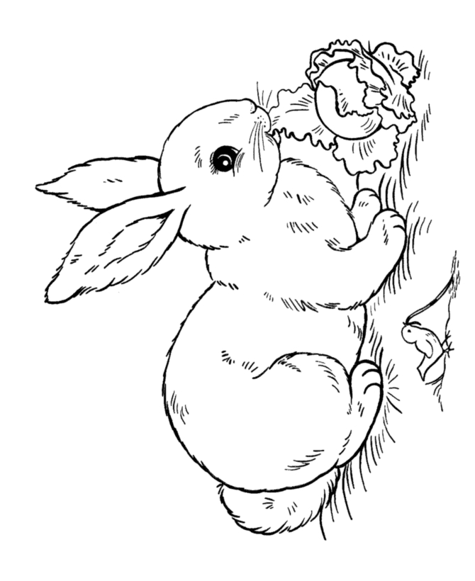 peeps coloring pages - marshmallow peeps coloring pages