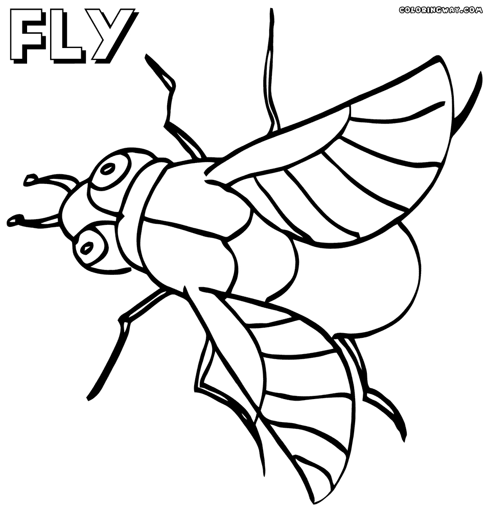 Picture to Coloring Page - Fly Coloring Pages