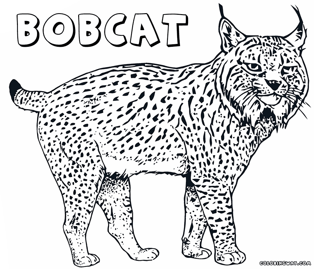 picture to coloring page - lynx coloring pages