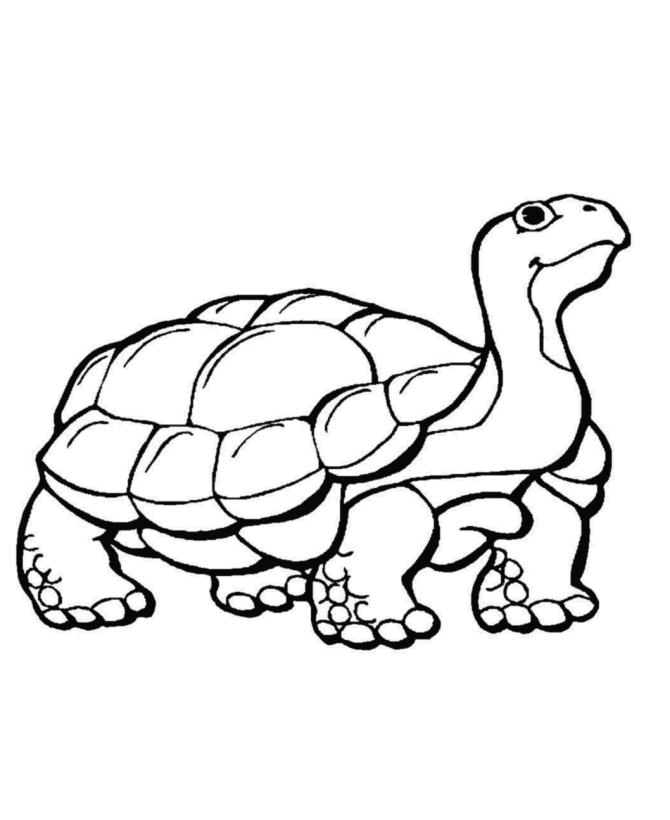pilgrim coloring pages - coloring pages of wild animals