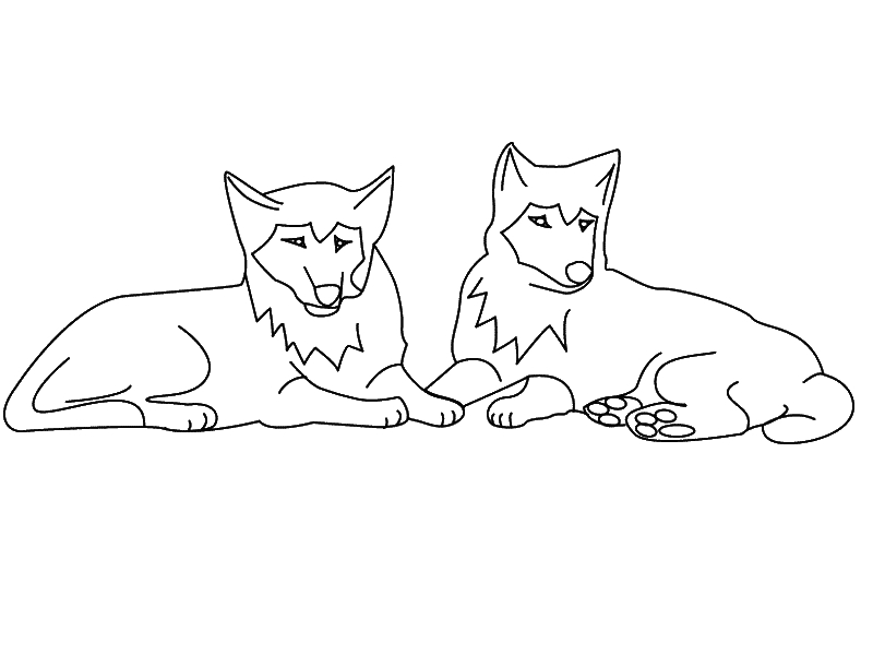 pitbull coloring pages - wolventml