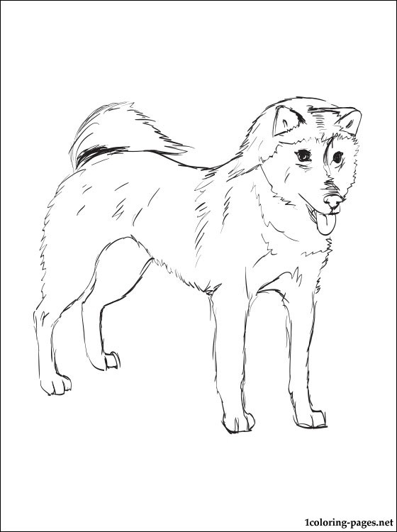 pitbull coloring pages - shiba inu coloring page