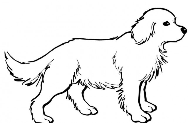 pitbull coloring pages - puppy color drawing