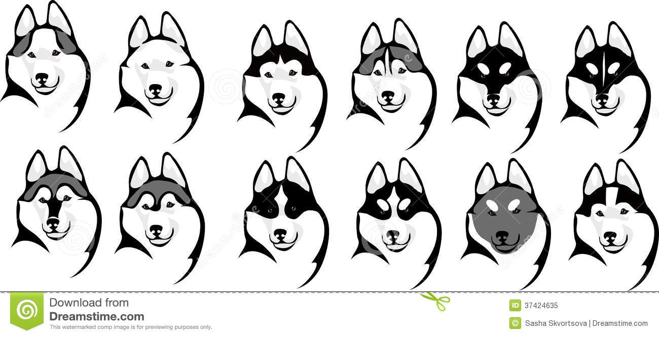 pitbull coloring pages - royalty free stock photo various color options head husky mask image