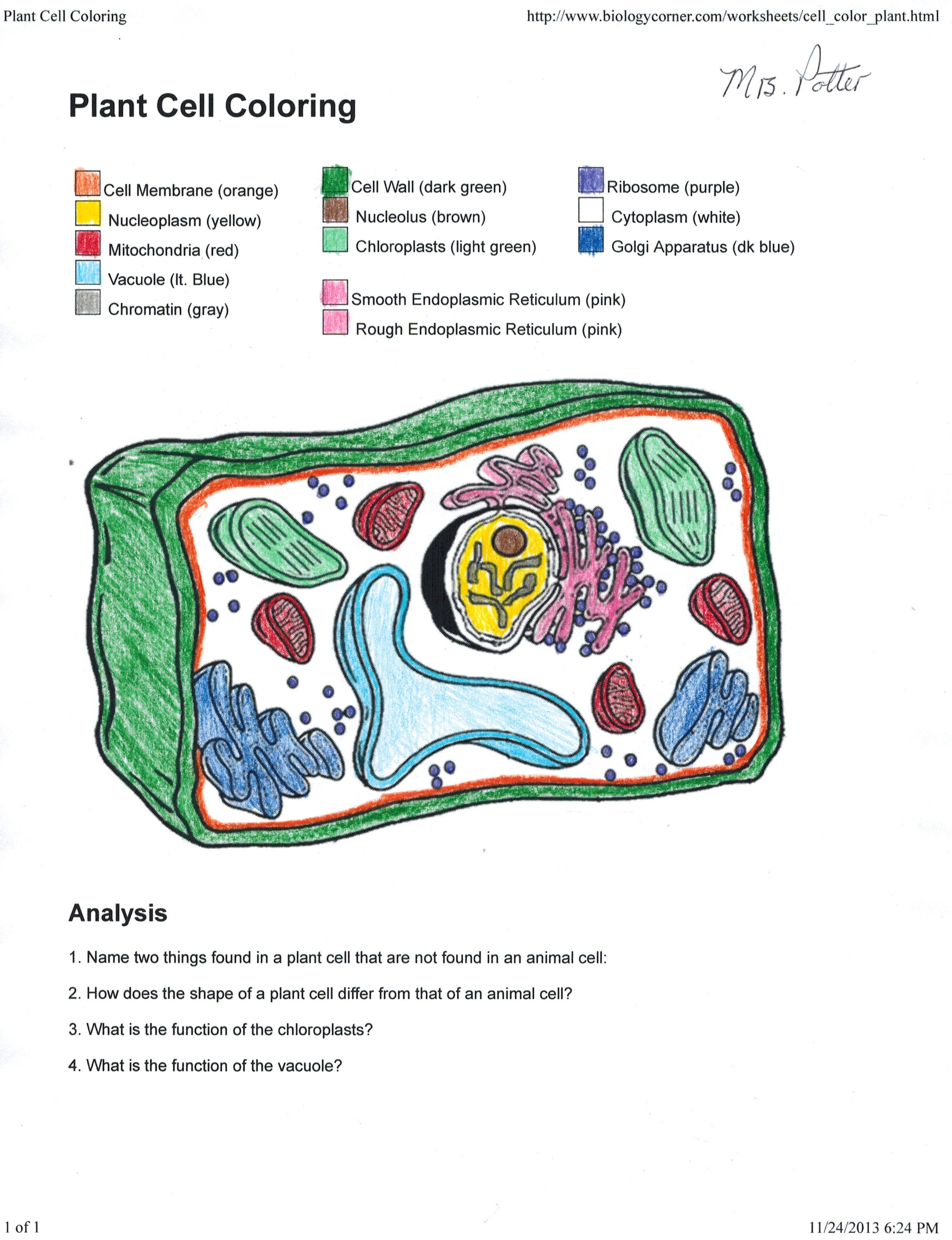 plant cell coloring page - apologia biology