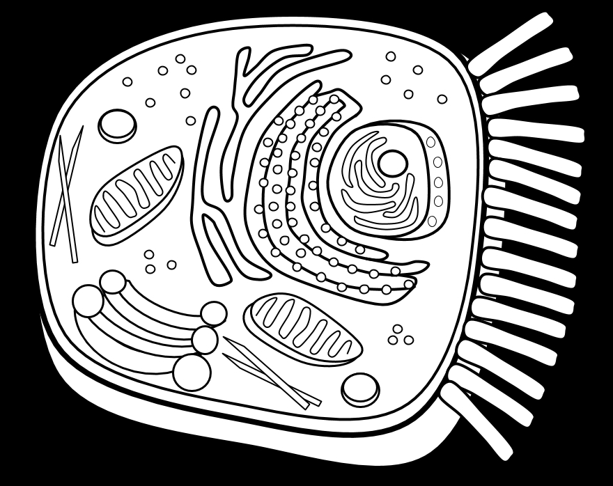 plant cell coloring page - coloring page plant cell