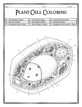 plant cell coloring page - Plant Cell Coloring