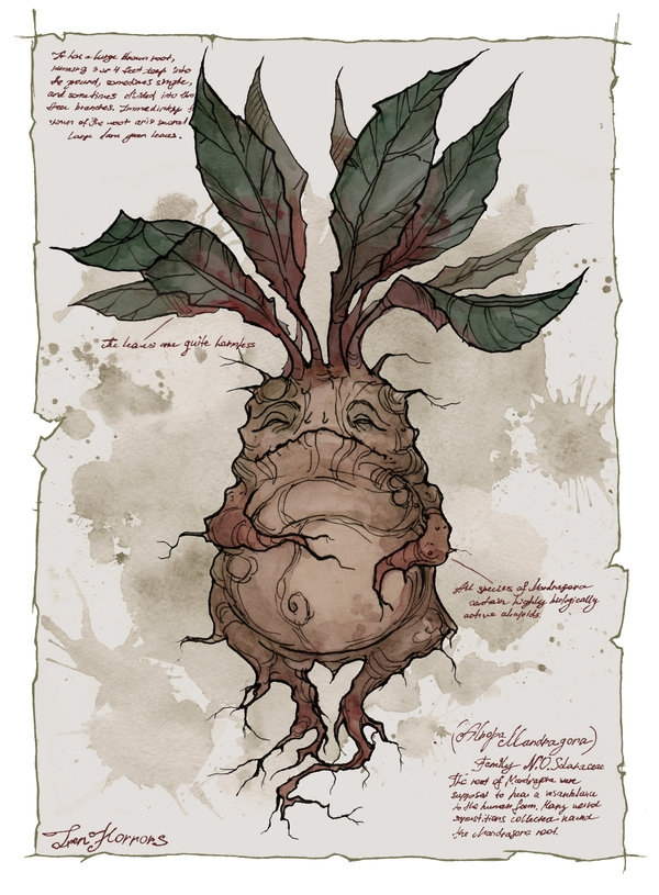 plant coloring pages - Mandrake