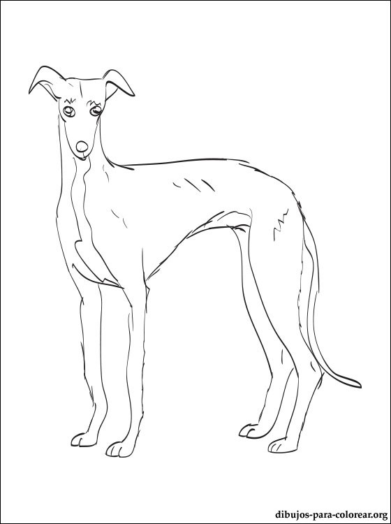 pluto coloring pages - dibujo de galgo espanol para colorear