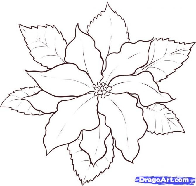 poinsettia coloring page - poinsettia color sheet flower bloom in december coloring page pages