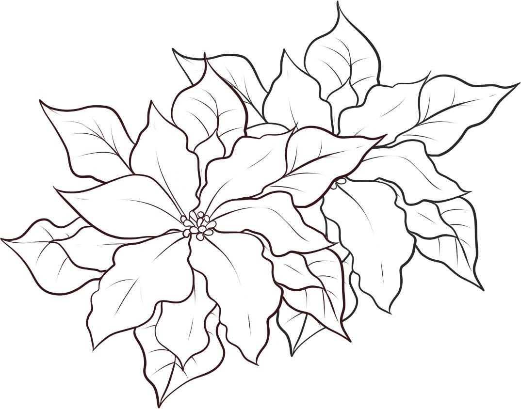20 Poinsettia Coloring Page Images Free Coloring Pages
