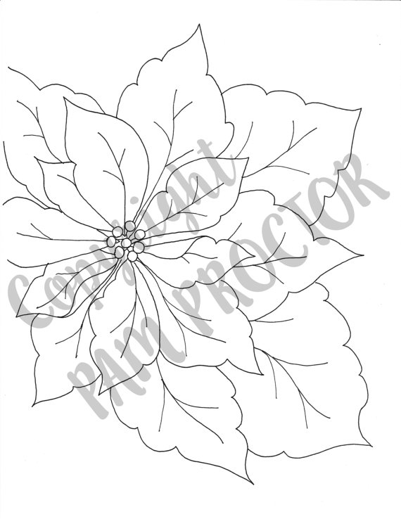 poinsettia coloring page - holiday christmas poinsettia coloring