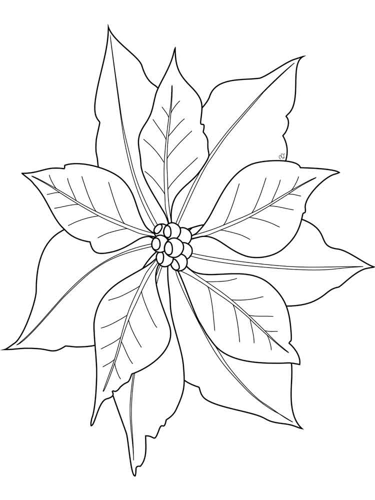 Poinsettia Coloring Page - Poinsettia Coloring Page for Kids Sketch Coloring Page