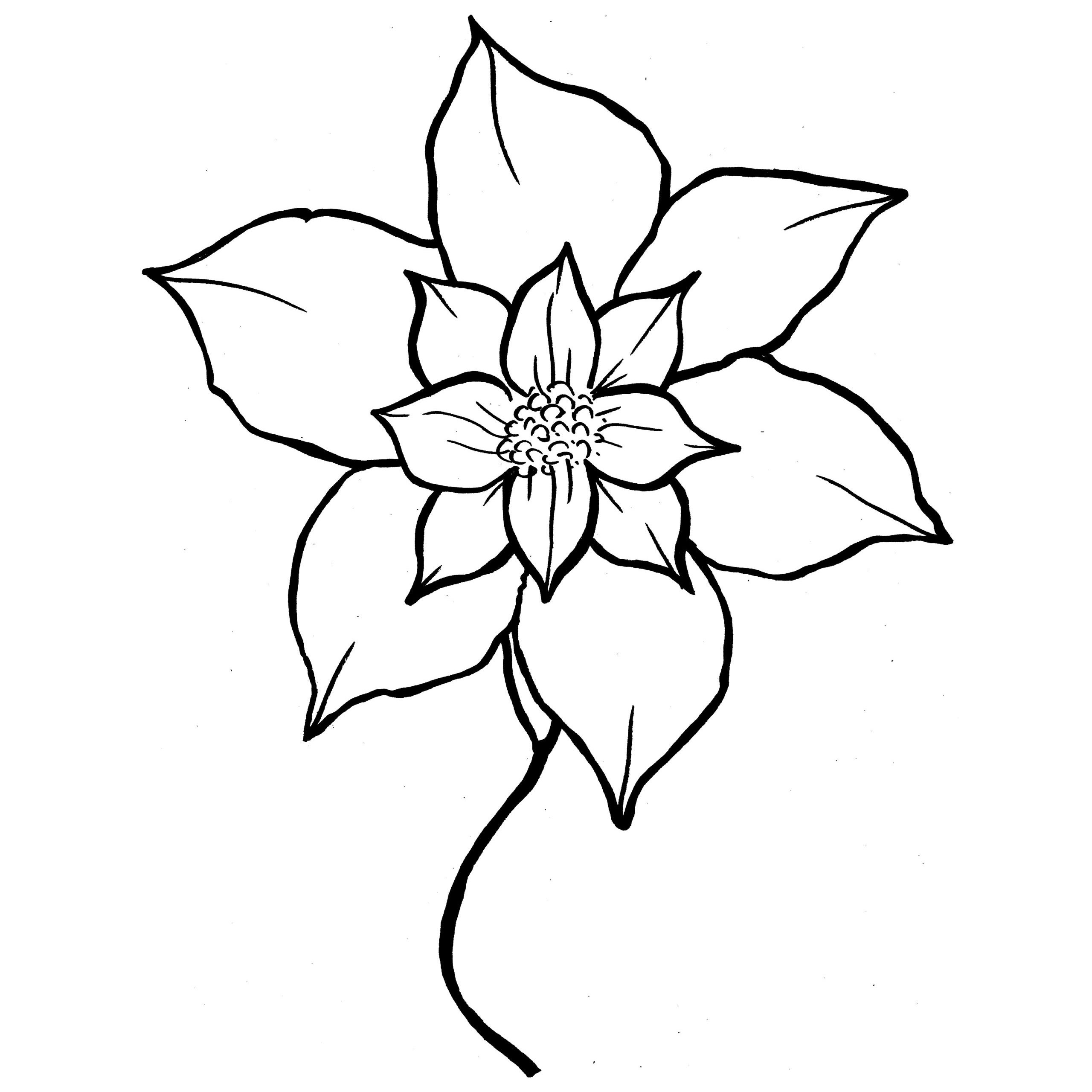 poinsettia coloring page - poinsettia