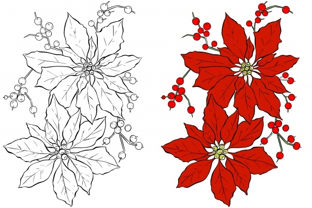 poinsettia coloring page - view image image= &picture=poinsettia flower coloring page