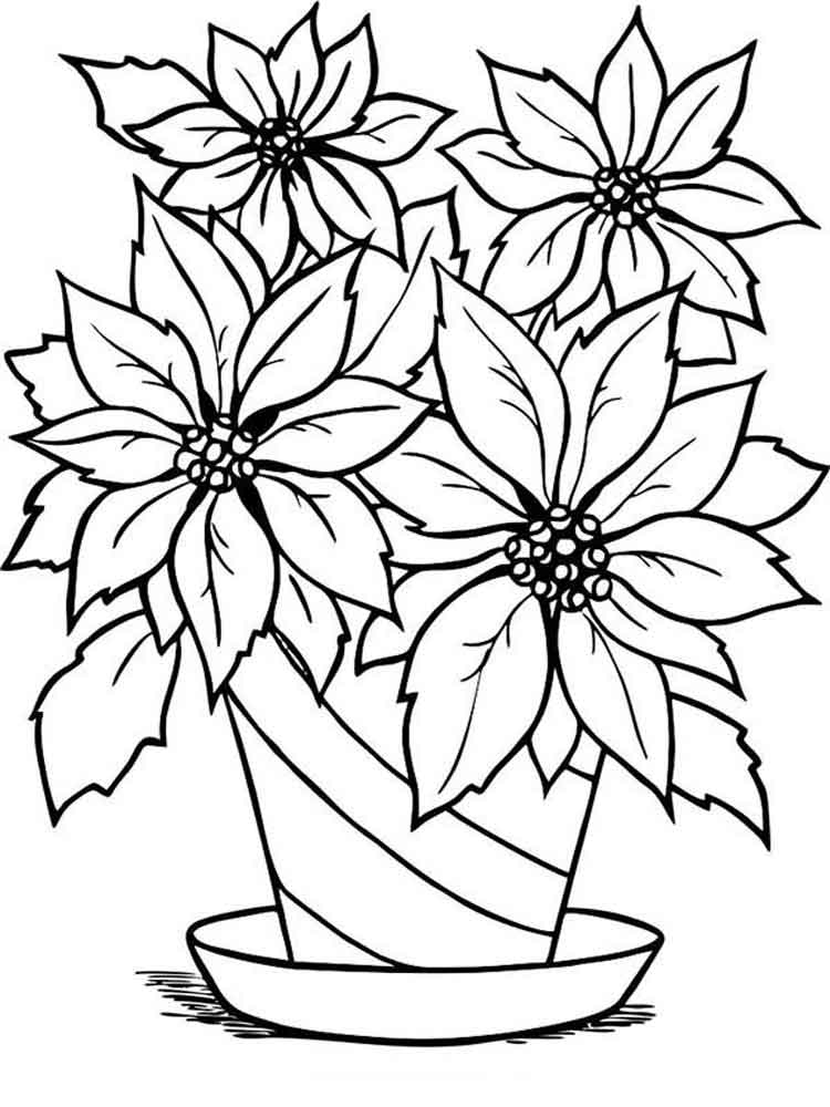 poinsettia coloring page - poinsettia flower coloring pages